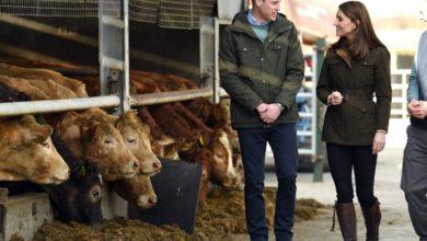 Photo of Дежавю: Кейт Миддлтон дважды за месяц появилась в одинаковых образах на разных фермах в Ирландии