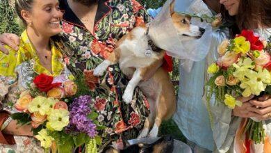 Photo of Собачья жизнь: Эмили Ратажковски провела необычную свадебную церемонию